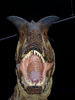 Dinosaur, Museum, Carnivore, Palaeontology, Dangerous