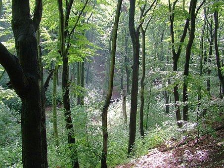 Dresden, Dresden Heath, Summer, Forest, Sun