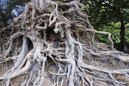 Root, Tree, Environment, Ecology, Life, Earth, Season