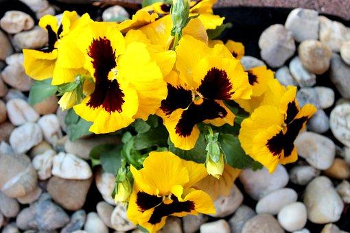 Nature, Plants, Flower, Spring, Garden, Yellow Flower