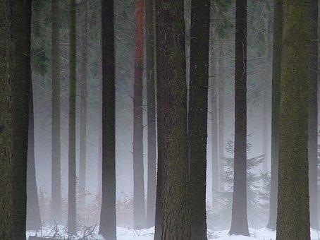 Forest, Dresden, Dresden Heath, Winter, Fog