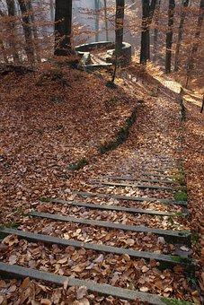 Forest, Autumn, Nature, Germany, Saxony, Dresden Heath