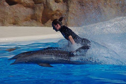 Dolphin, Marine Mammals, Water, Dolphins, Swim, Fast