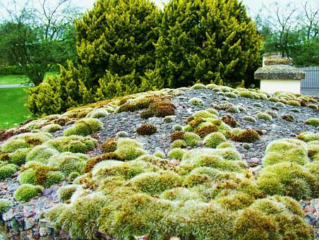 Moss, Algae, Green, Growth, Nature, Texture, Surface