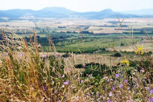 View, Balaton, Flowers, Wildflowers, Landscape