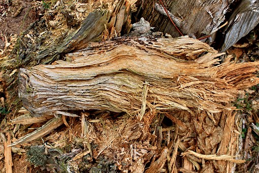 Wood, Old, Tree, Decay, Ailing, Log, Gnarled, Nature