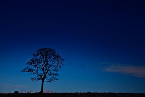 Black, Blue, Branches, Dark, Dusk, Evening, Glow