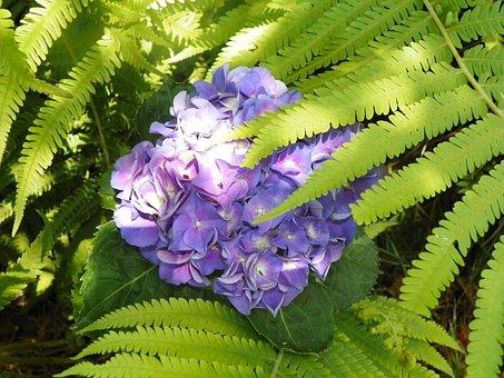 Bloom Flower, Fern, Flowering Plant, Fern-like Leaves