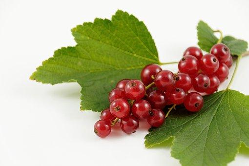 Träubele, Currants, Fruit, Berries, Food, Nature