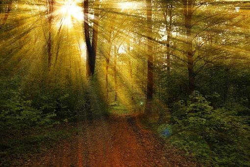 Rays, Forest, Nature, Landscape, Light, Sun, Sunlight