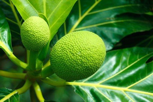 Fruit, Food, Breadfruit, Ripe, Tasty, Green, Sweet