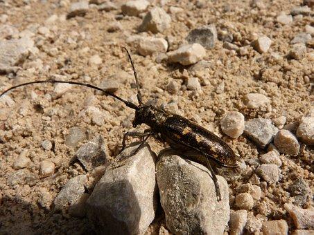 Beetle, Insect, Probe, Animal, Scrape
