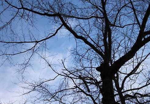 Trees, Branches, Silhouette, Top, Dark, Black, Stems