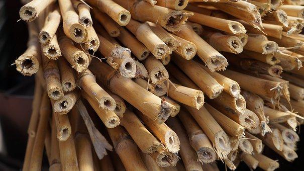 Bamboo, Woody, Stalk, Bamboo Garden, Wood, Plant