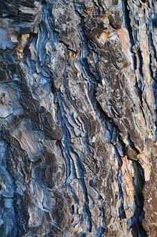 Trees, Bark, Grey, Gray, Trunks, Woods, Wooden, Woody