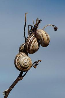 Snails, Shell, Branch, Sky