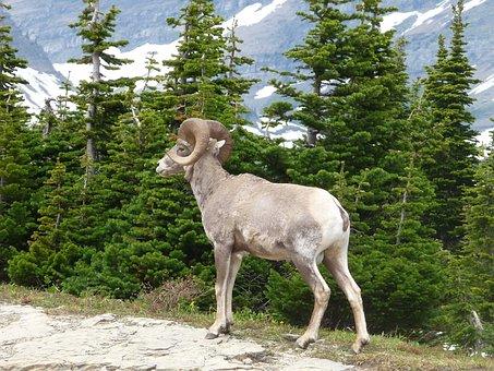 Montana, Glacier National Park, Mountains, Scenic