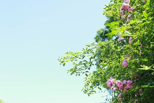 Flowers, Plant, Sunshine, Irradiation, Fresh, Beautiful