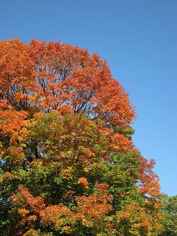 Trees, Autumn, Leaves, Red, Green, Orange, Leafy