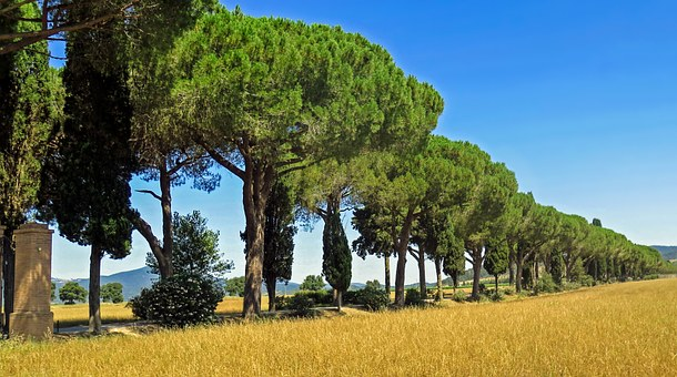 Cypress, Tuscany, Italy, Pine, Avenue, Landscape, Sky