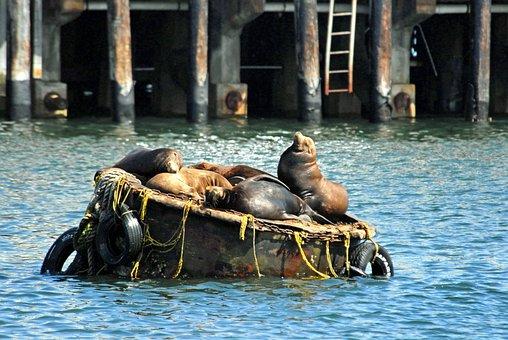 California, Sea Lions, Buoy, Harbor, Bay, Water