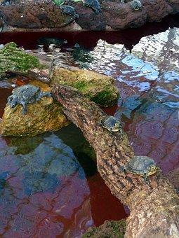 Turtles, Reptile, Animals, Water, Nature, Wildlife