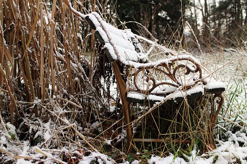 Nature, Bench, Bank, Winter, Wild, Dilapidated, Shabby