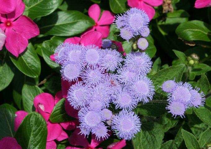 Flower, Pink, Floral, Blossom, Petal, Bloom, Exotic