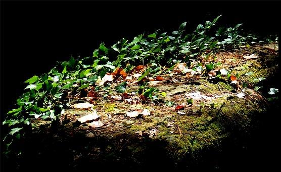 Vine, Shadows, Nature, Plant, Creeping Plants, Green