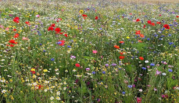 Wild Flowers, Mark, Flowers, Summer, Flower Meadow