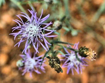 Wild Flower, Flower, Floral, Blossom, Petal, Bloom