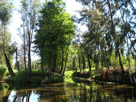 Channel, Xochimilco, Trajinera, Barge, Water, River
