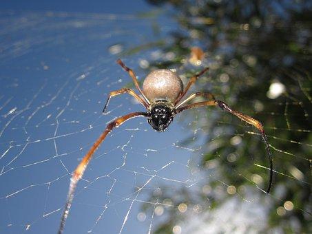 Animal, Spider, New Caledonia
