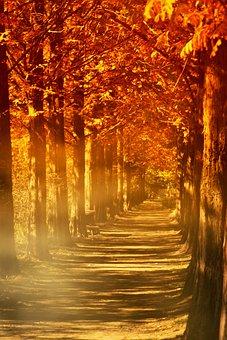 Autumn, Leaves, Fog, Wood, Red Maple, Love, Memory