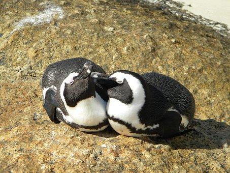Pingivn, Love, Bird