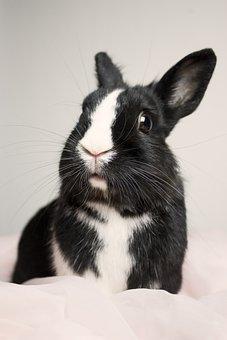 Bunny, Rabbit, Cute, Animal, Happy, Pet, Fur, Funny