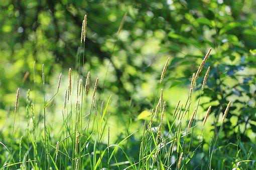 Summer, Grass, Green Grass, Scent Of Summer, Mood, Heat