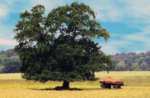 Tree, Nature, Fields, Grain Cart, Landscape, Seasons