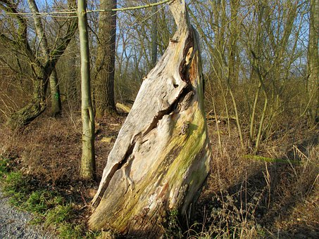 Nature, Tree, Tribe, Gnarled, Old, Strunk, Tree Stump