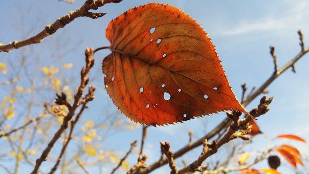 Fall, Leaf, Sky, Last One, Isolate