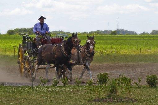 Argentina, Gaucho, Horses, Plain Field, Landscape