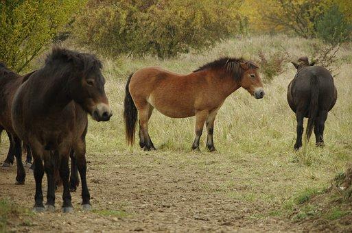 Wild Horse, Horse, Animal, Graft, Nature, Horses