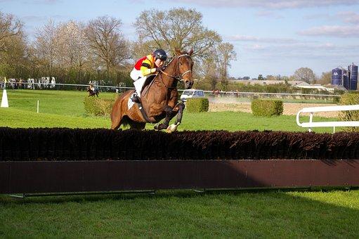 Horse Racing, Horses, Sports, Meral, Horseback Riding