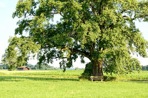 Recovery, Leisure, Tree, Individually, Nature, Green