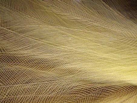 Bird Of Paradise, Feathers, Macro, Closeup, Structure