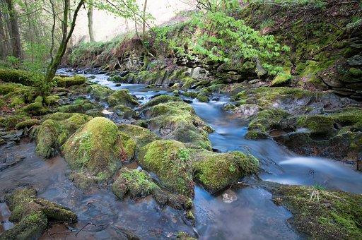 Bach, Water, National Park, Eifel, Nature, Forest, Moss