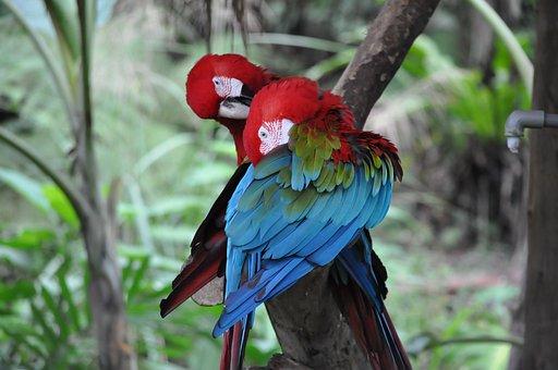 Parrot, Birds, Pet, Rest