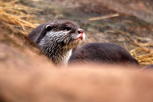 Whiskers, Cute, Fur, Playful, Animal, Wild, Zoology