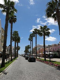 Palm Trees, Road, Cascais, Portugal, Summer, Sun