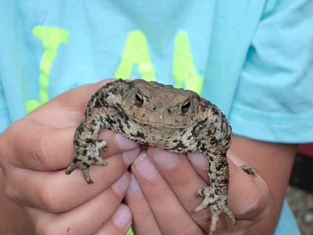 Toad In Hand, Child, Close